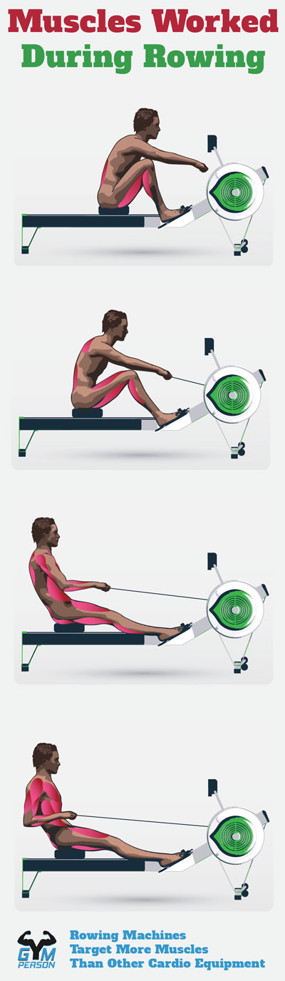 Muscles Worked on the Rowing Machine